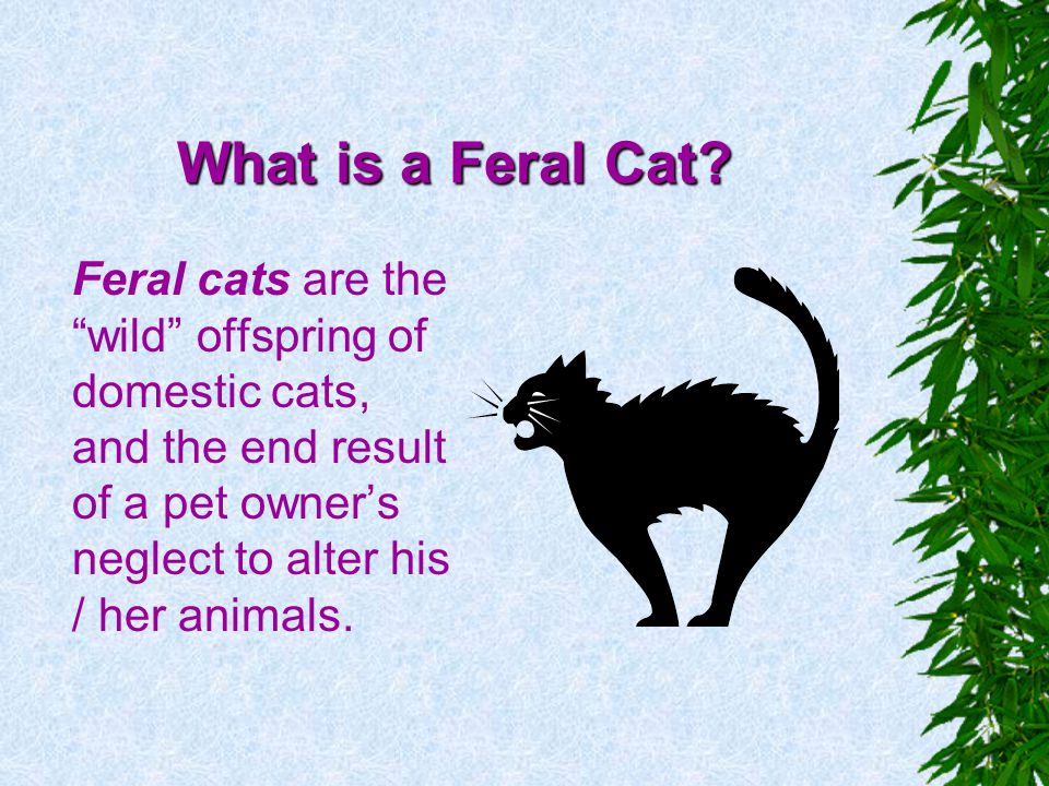 What is a Feral Cat.