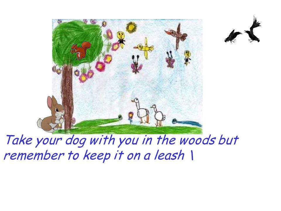 Take your dog with you in the woods but remember to keep it on a leash \