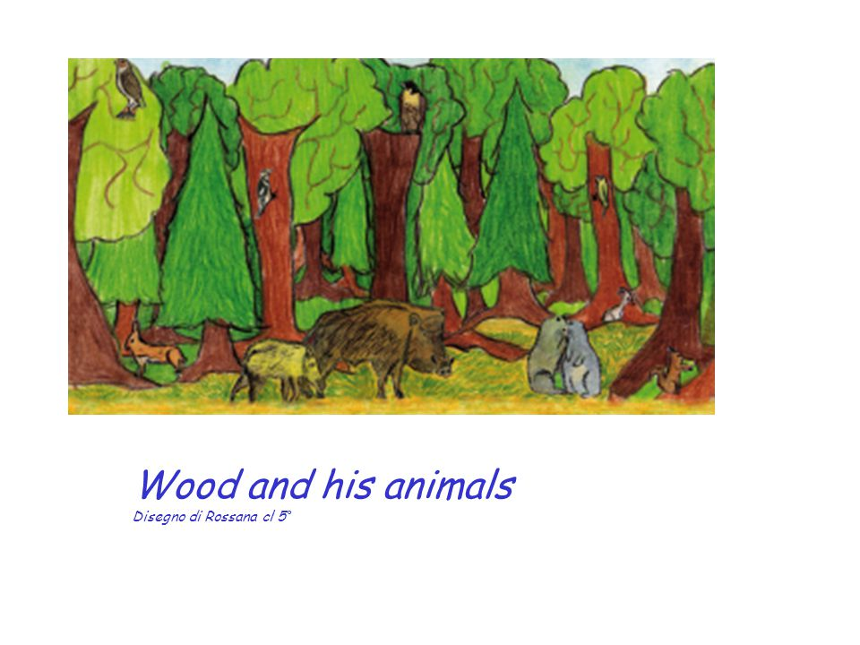 Wood and his animals Disegno di Rossana cl 5°
