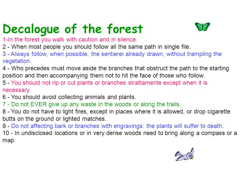 Decalogue of the forest 1-In the forest you walk with caution and in silence. 2 - When most people you should follow all the same path in single file.