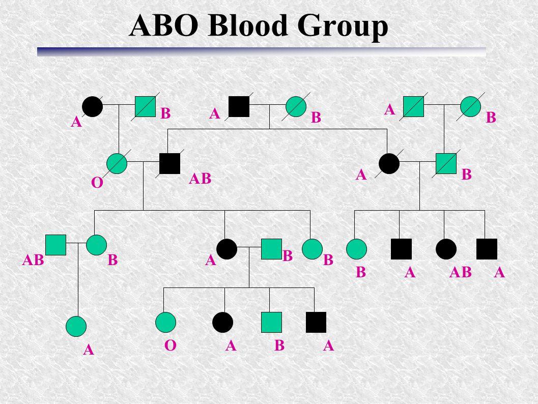 ABO Blood Group A A A A A AAA AA A B BB B B BAB B B B B B O O A