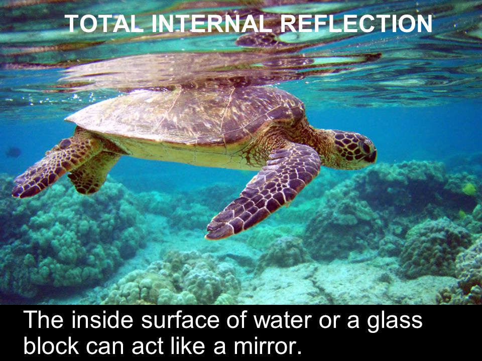 TOTAL INTERNAL REFLECTION The inside surface of water or a glass block can act like a mirror.