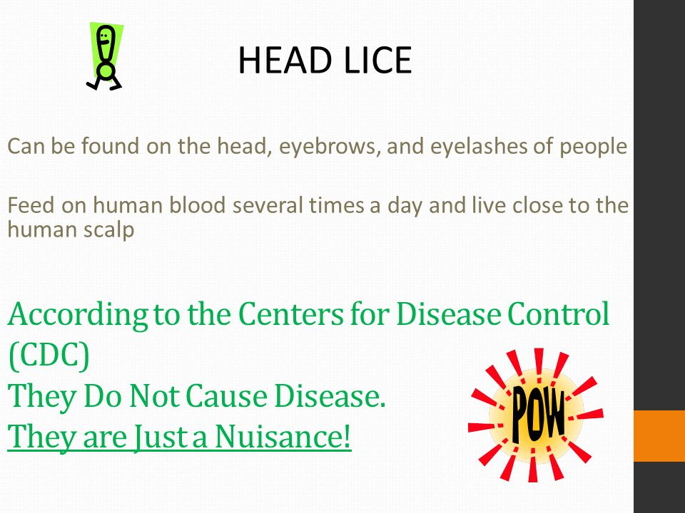According to the Centers for Disease Control (CDC) They Do Not Cause Disease. They are Just a Nuisance! HEAD LICE Can be found on the head, eyebrows,