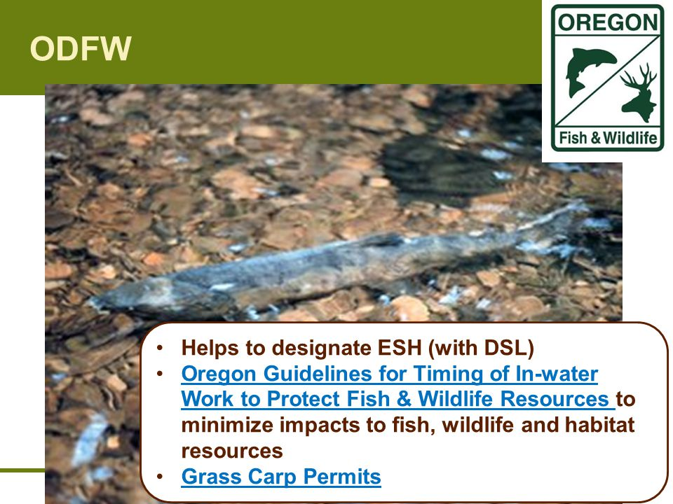 ODFW Helps to designate ESH (with DSL) Oregon Guidelines for Timing of In-water Work to Protect Fish & Wildlife Resources to minimize impacts to fish, wildlife and habitat resourcesOregon Guidelines for Timing of In-water Work to Protect Fish & Wildlife Resources Grass Carp Permits