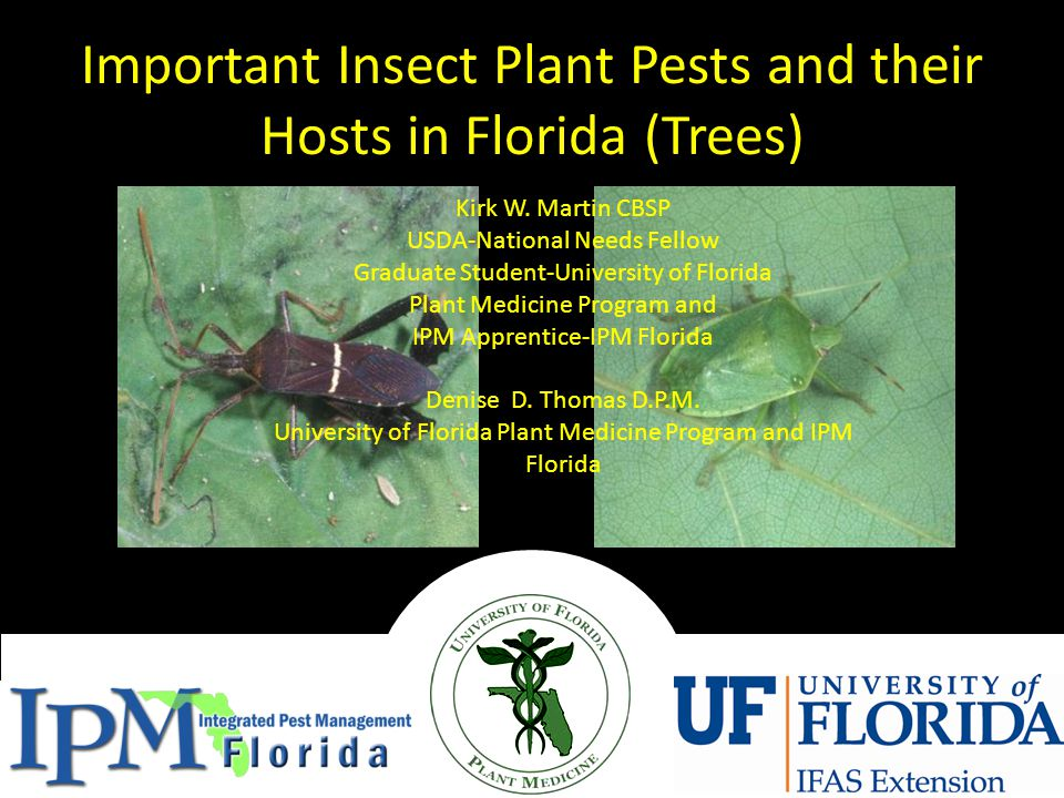 Important Insect Plant Pests and their Hosts in Florida (Trees) Kirk W.