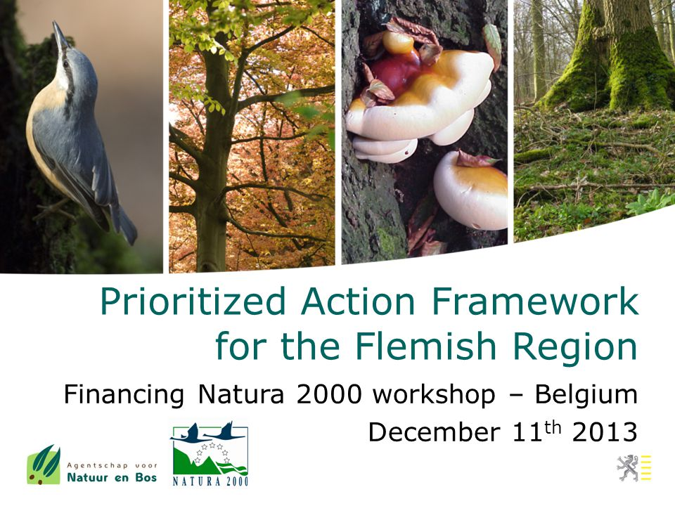 Flemish financial means Nature policy Other government budgets flanking policy for farming maintenance of public properties regular policy Innovative financing options being explored 11/12/2013 PAF Flanders - Financing Natura 2000 workshop - Belgium42