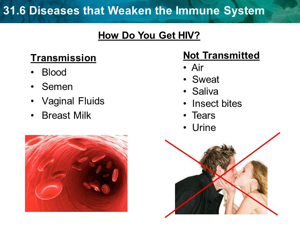 31.6 Diseases that Weaken the Immune System Transmission Blood Semen Vaginal Fluids Breast Milk Not Transmitted Air Sweat Saliva Insect bites Tears Urine How Do You Get HIV