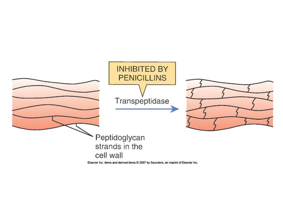 Cephalosporins: Interactions Probenecid: delays renal excretion Alcohol: three drugs that interfere with Vit K metabolism may induce ETOH intolerance Anti-coagulants