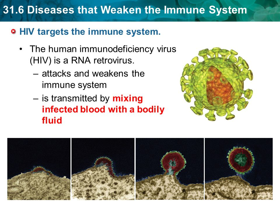 31.6 Diseases that Weaken the Immune System HIV targets the immune system. The human immunodeficiency virus (HIV) is a RNA retrovirus. –attacks and we