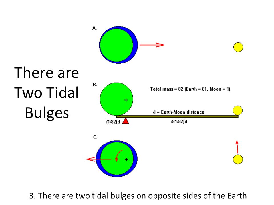 Both Moon and Sun Cause Tides 4. Solar and Lunar tidal effects can reinforce or weaken each other