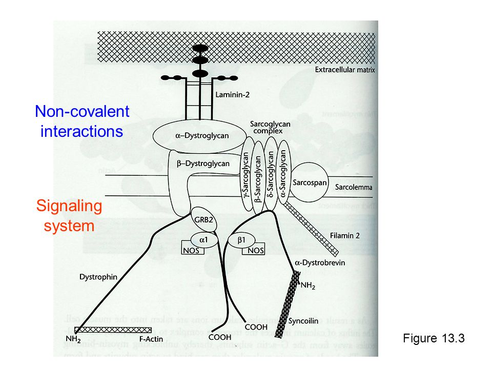 Figure 13.3 Non-covalent interactions Signaling system