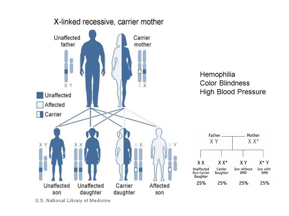 Hemophilia Color Blindness High Blood Pressure