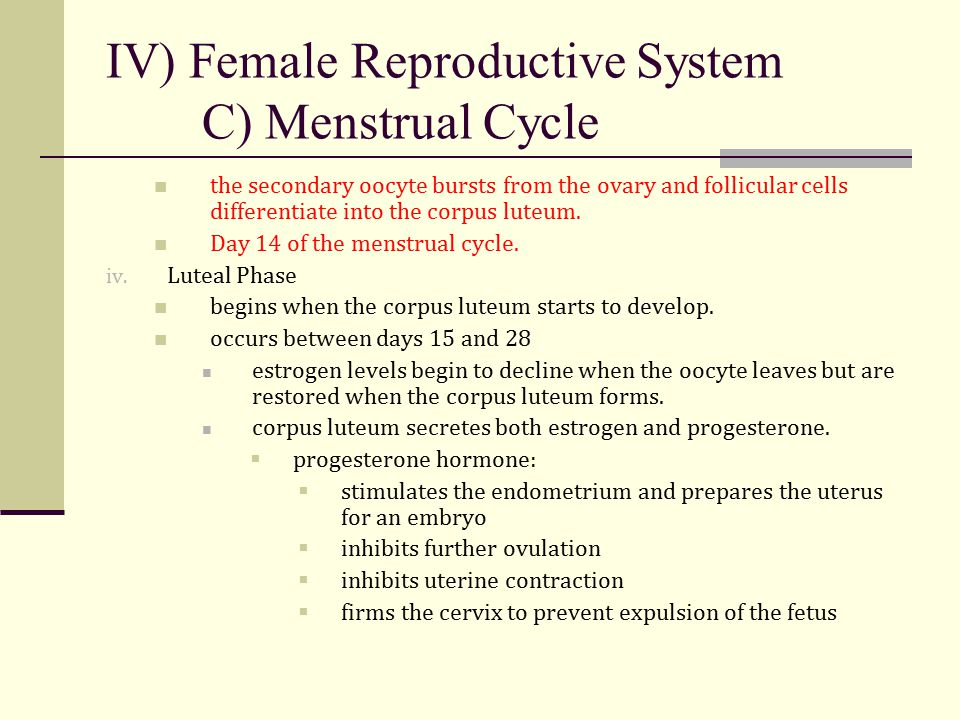 IV) Female Reproductive System C) Menstrual Cycle the secondary oocyte bursts from the ovary and follicular cells differentiate into the corpus luteum