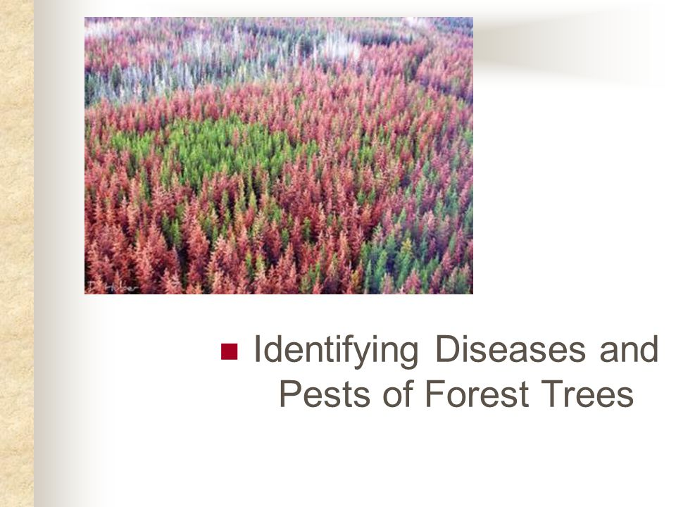 Fungus Fungus diseases can attack any part of the tree.