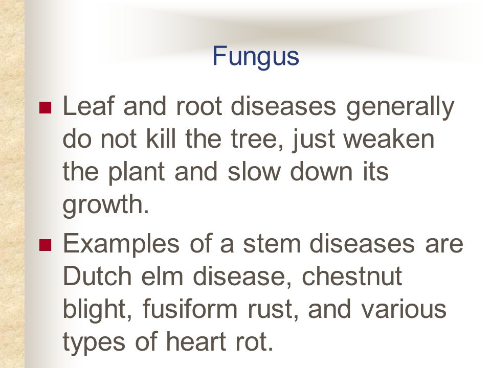 Fungus Leaf and root diseases generally do not kill the tree, just weaken the plant and slow down its growth.