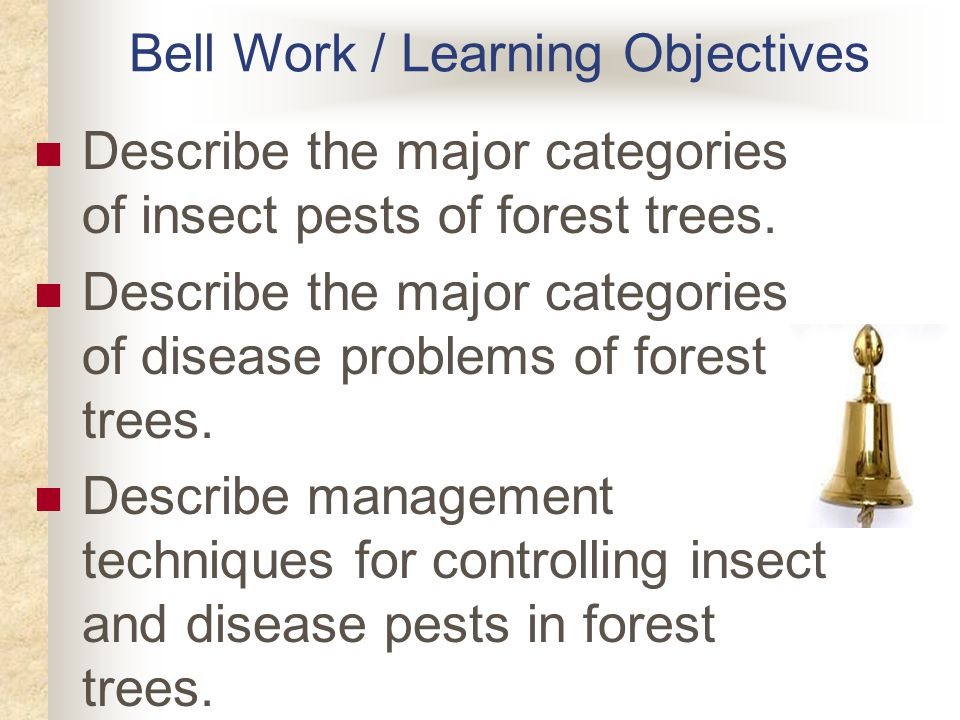 Bell Work / Learning Objectives Describe the major categories of insect pests of forest trees.