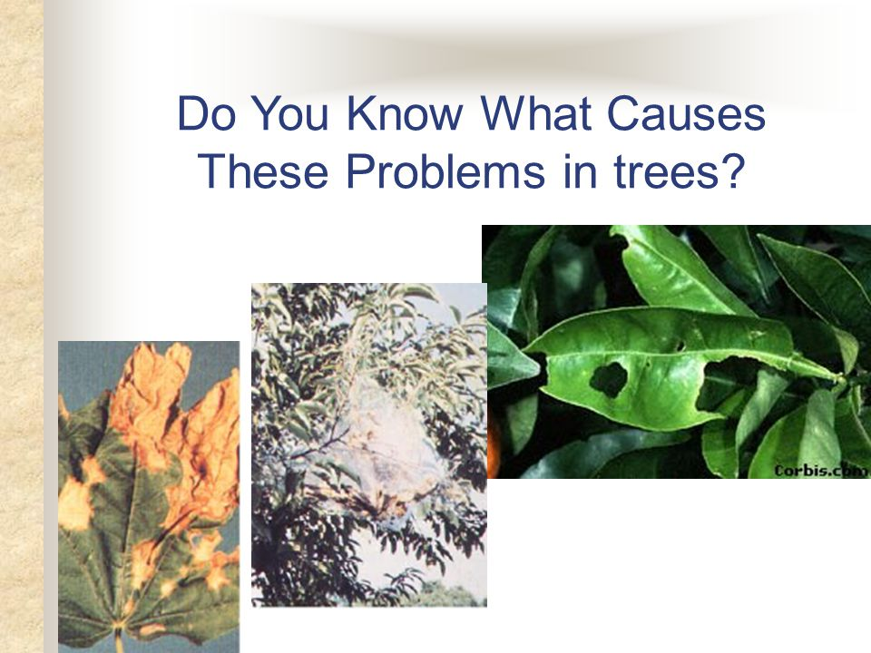 Do You Know What Causes These Problems in trees