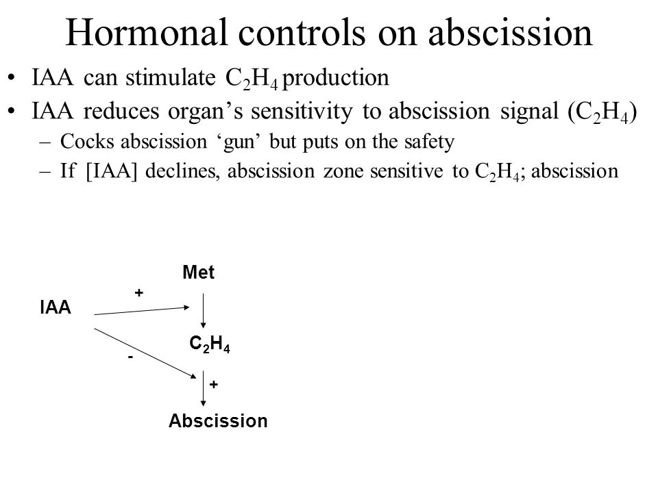 Hormonal controls on abscission IAA can stimulate C 2 H 4 production IAA reduces organ's sensitivity to abscission signal (C 2 H 4 ) –Cocks abscission 'gun' but puts on the safety –If [IAA] declines, abscission zone sensitive to C 2 H 4 ; abscission Abscission Met C2H4C2H4 IAA + - +