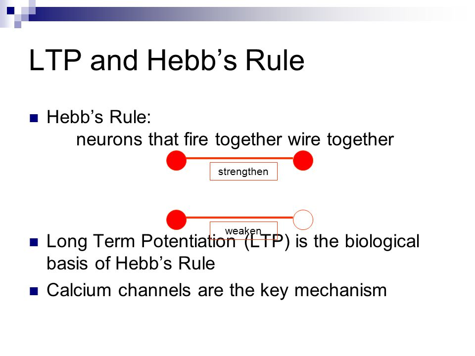 Chemical realization of Hebb's rule It turns out that there are elegant chemical processes that realize Hebbian learning at two distinct time scales  Early Long Term Potentiation (LTP)  Late LTP These provide the temporal and structural bridge from short term electrical activity, through intermediate memory, to long term structural changes.