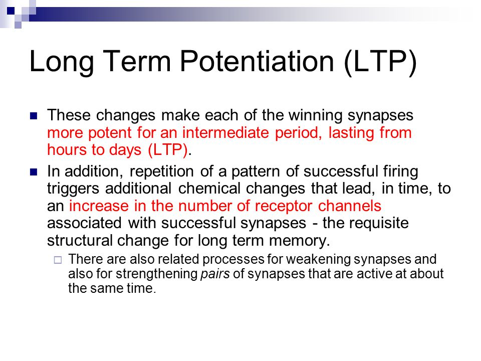 Long Term Potentiation (LTP) These changes make each of the winning synapses more potent for an intermediate period, lasting from hours to days (LTP).