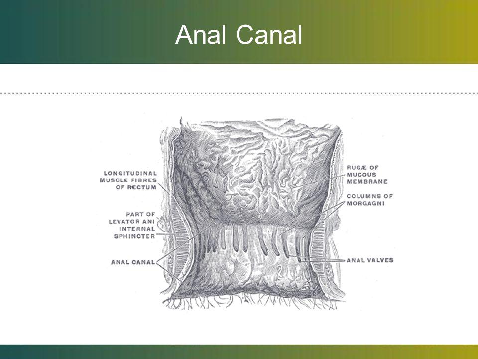Pre-banding Preparation 1.No laxatives, bowel preparation, enemas are needed.