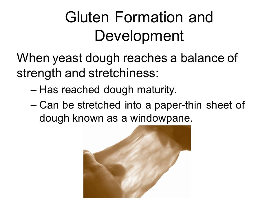 Gluten Formation and Development When yeast dough reaches a balance of strength and stretchiness: –Has reached dough maturity.
