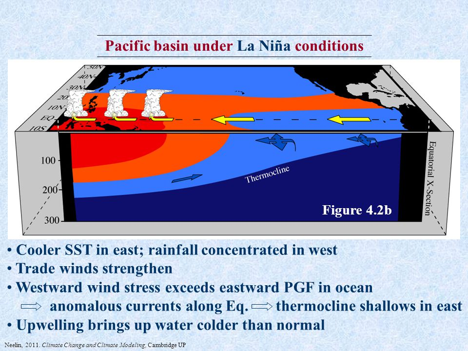 Pacific basin under La Niña conditions Cooler SST in east; rainfall concentrated in west Trade winds strengthen Westward wind stress exceeds eastward PGF in ocean anomalous currents along Eq.