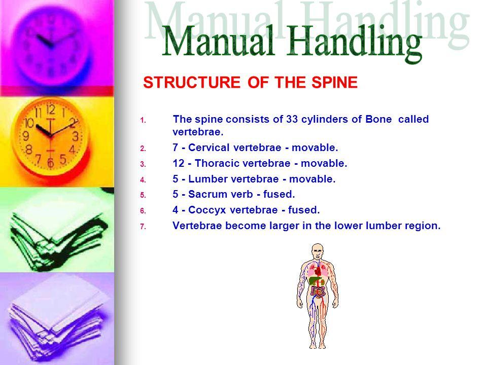   The spine consists of 33 cylinders of Bone called vertebrae.   7 - Cervical vertebrae - movable.   12 - Thoracic vertebrae - movable. 