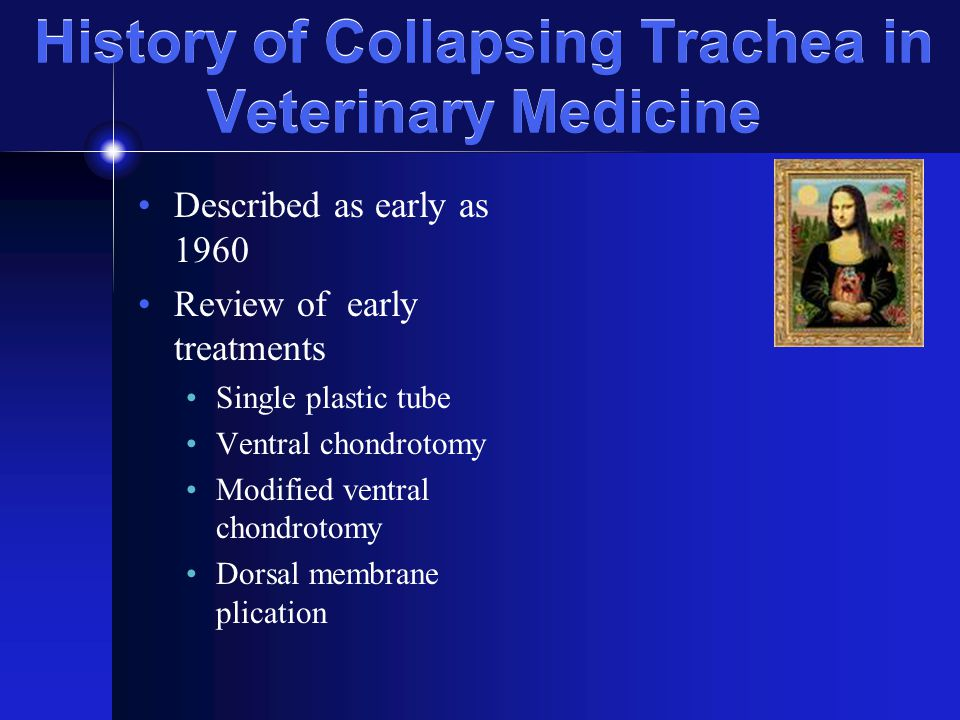 History of Collapsing Trachea in Veterinary Medicine Described as early as 1960 Review of early treatments Single plastic tube Ventral chondrotomy Modified ventral chondrotomy Dorsal membrane plication