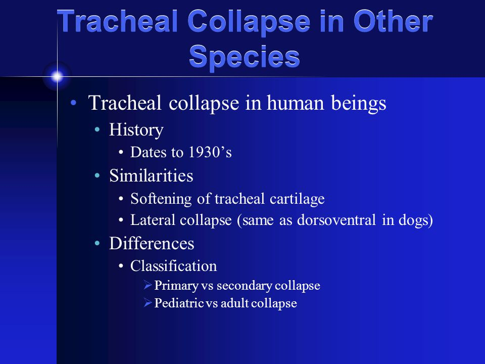 Tracheal Collapse in Other Species Tracheal collapse in large animals Horses Congenital Secondary to laryngeal paralysis Cattle Acquired neonatal Tracheal collapse in birds Bordetella avium in turkeys