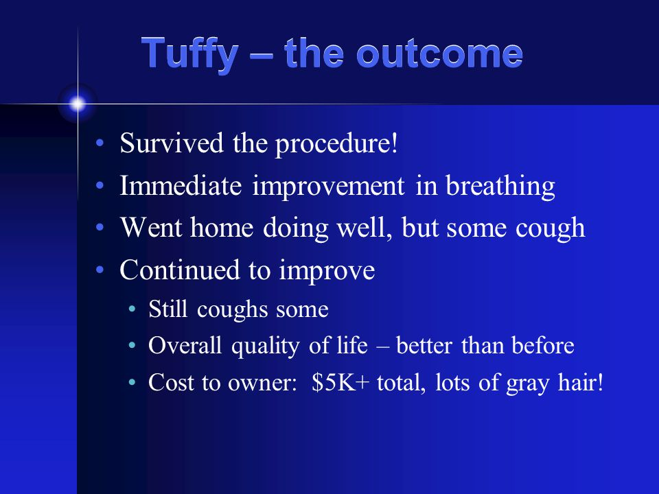 Tuffy – the outcome Survived the procedure.