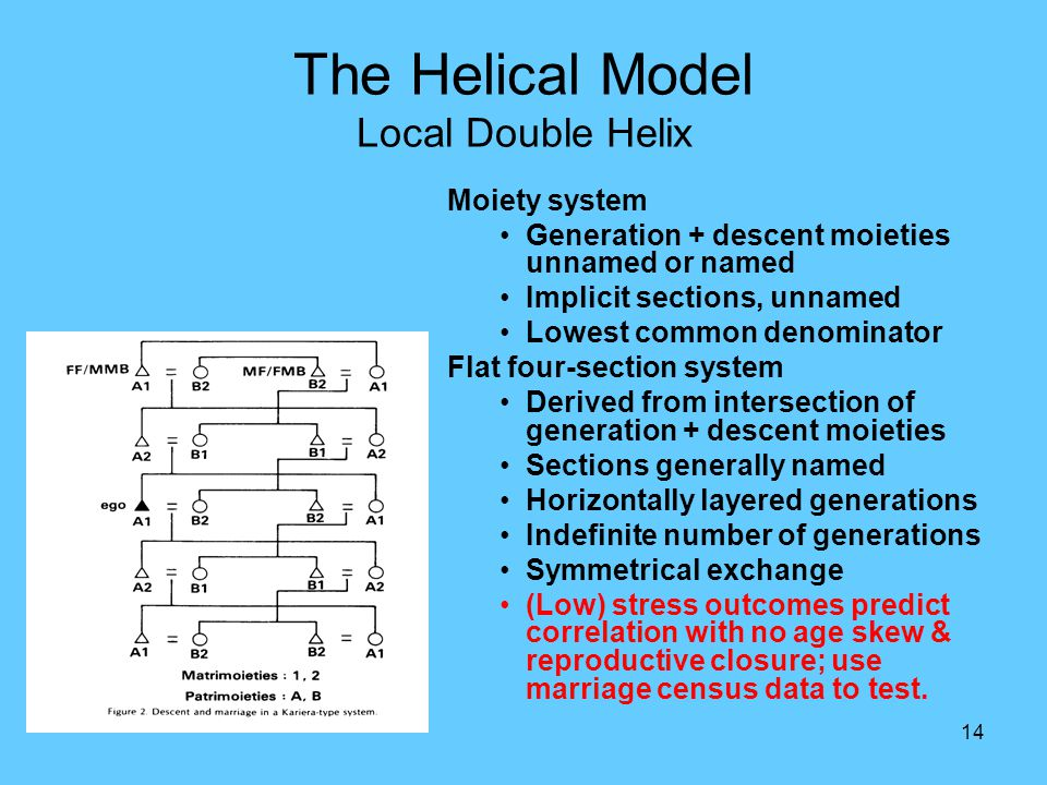14 The Helical Model Local Double Helix Moiety system Generation + descent moieties unnamed or named Implicit sections, unnamed Lowest common denominator Flat four-section system Derived from intersection of generation + descent moieties Sections generally named Horizontally layered generations Indefinite number of generations Symmetrical exchange (Low) stress outcomes predict correlation with no age skew & reproductive closure; use marriage census data to test.