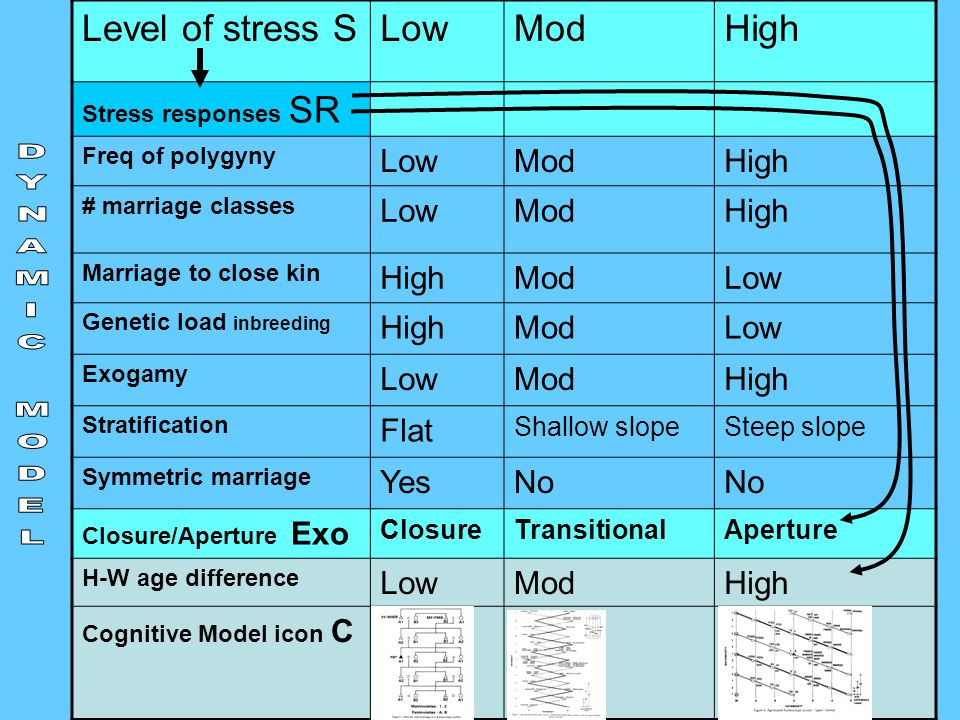 27 Level of stress SLowModHigh Stress responses SR Freq of polygyny LowModHigh # marriage classes LowModHigh Marriage to close kin HighModLow Genetic load inbreeding HighModLow Exogamy LowModHigh Stratification Flat Shallow slopeSteep slope Symmetric marriage YesNo Closure/Aperture Exo ClosureTransitionalAperture H-W age difference LowModHigh Cognitive Model icon C
