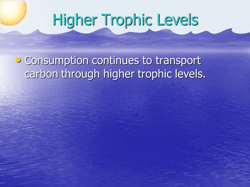 Consumption continues to transport carbon through higher trophic levels.