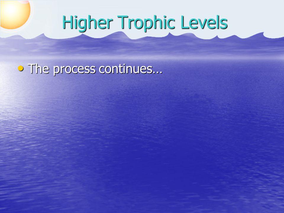 The process continues… The process continues… Higher Trophic Levels