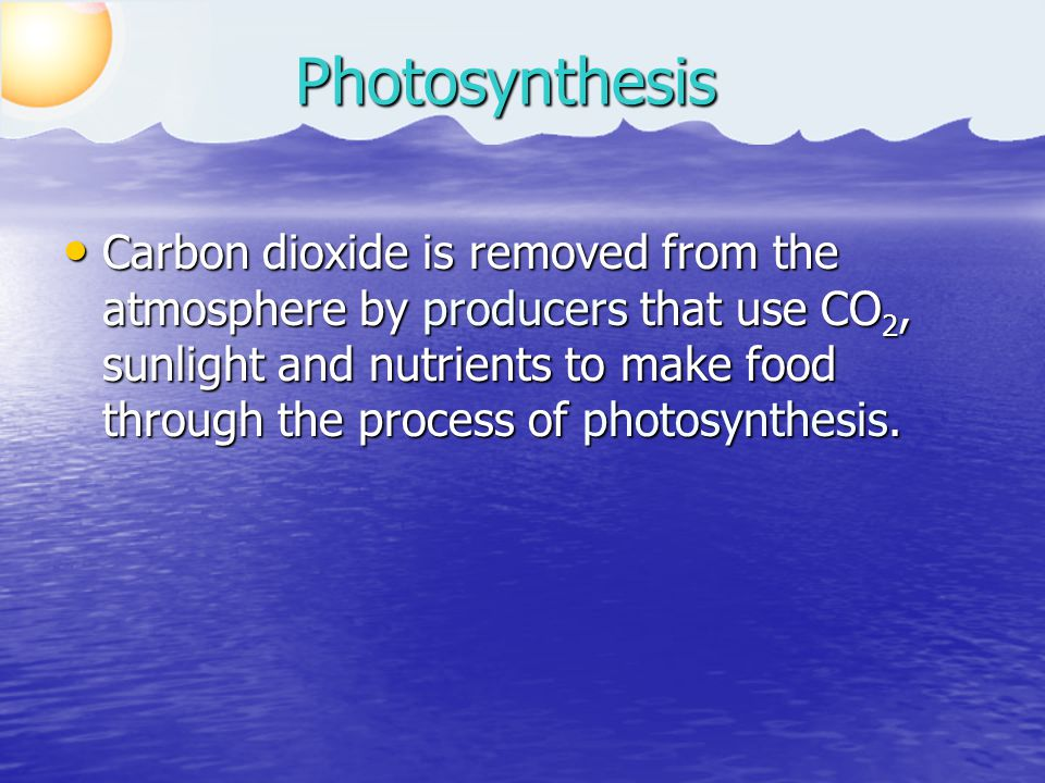 Carbon dioxide is removed from the atmosphere by producers that use CO 2, sunlight and nutrients to make food through the process of photosynthesis.