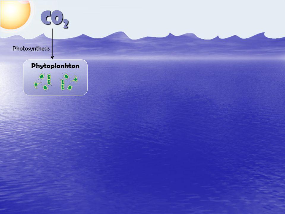 CO 2 Phytoplankton Photosynthesis