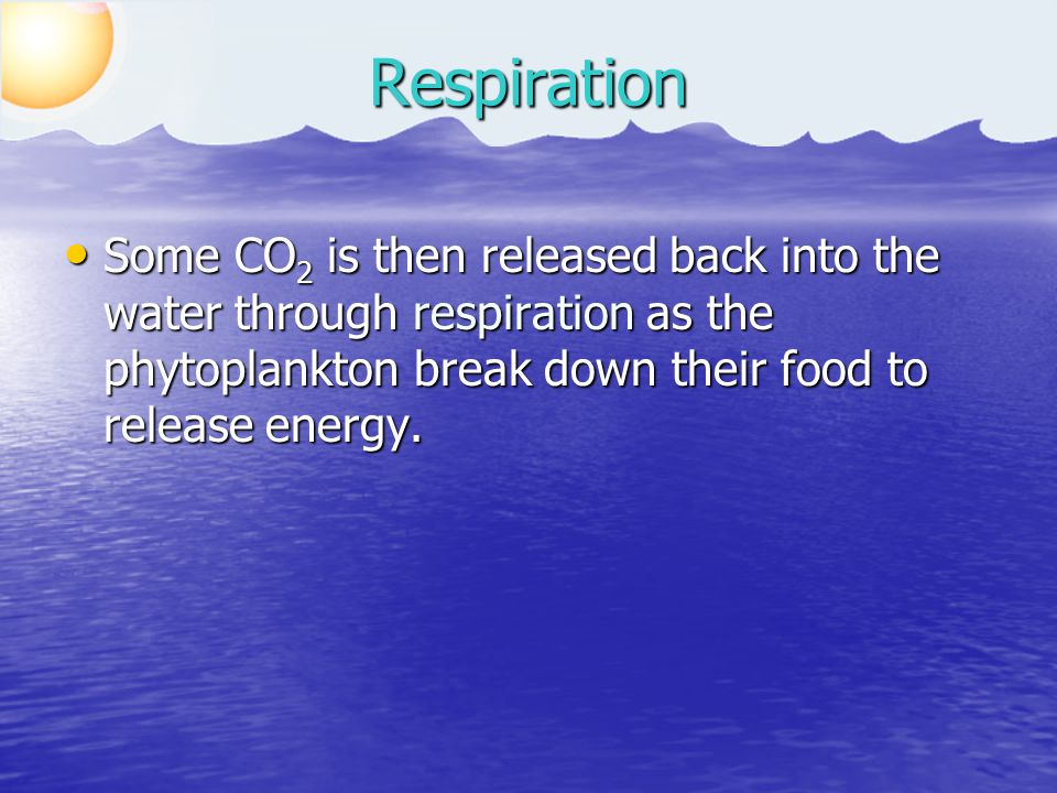 Some CO 2 is then released back into the water through respiration as the phytoplankton break down their food to release energy.