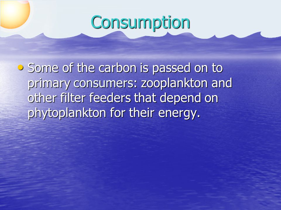 CO 2 Phytoplankton Zooplankton Consumption RespirationPhotosynthesis