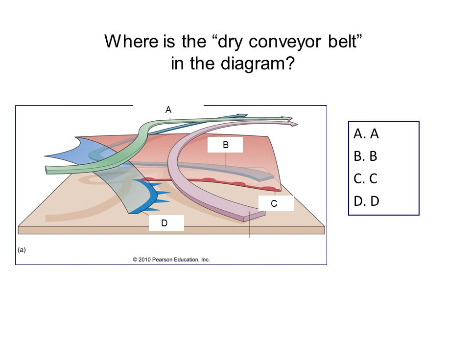 A. A B. B C. C D. D Where is the dry conveyor belt in the diagram B A D C