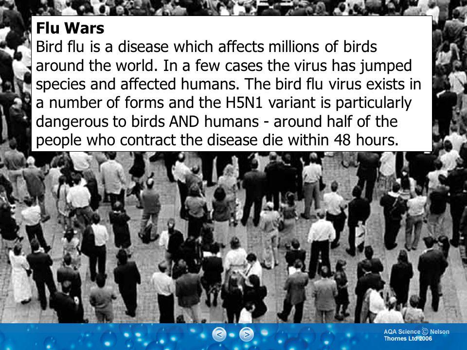Flu Wars Bird flu is a disease which affects millions of birds around the world.