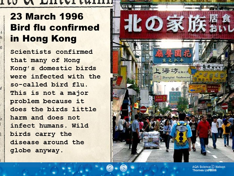 23 March 1996 Bird flu confirmed in Hong Kong Scientists confirmed that many of Hong Kong's domestic birds were infected with the so-called bird flu.