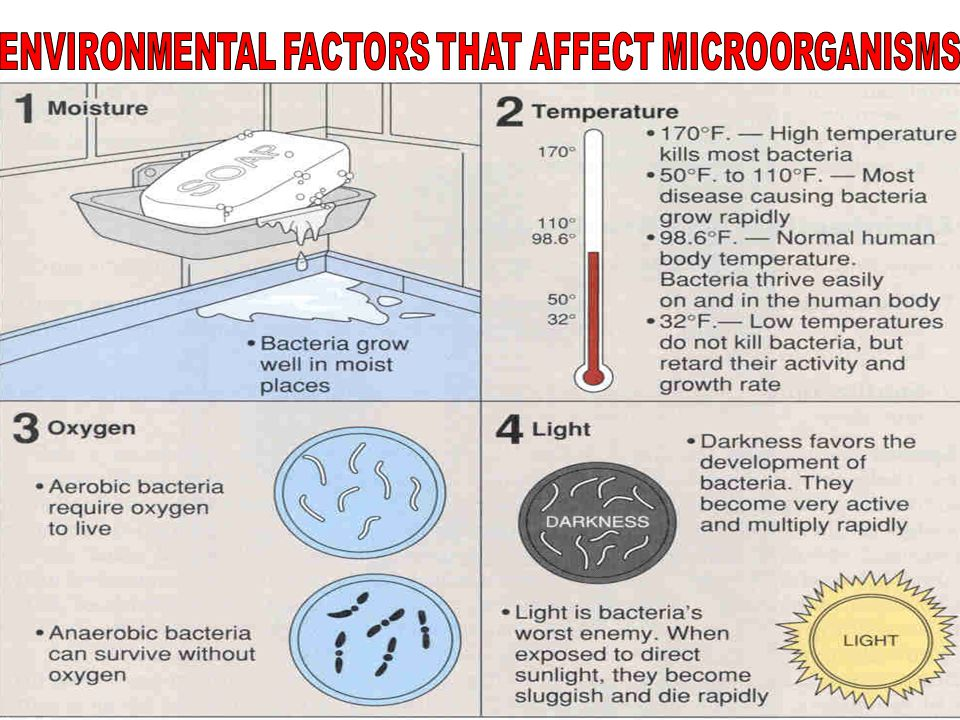 PATHOGENS  HARMFUL ORGANISMS THAT CAN CAUSE AN INFECTION WHEN THEY ENTER THE BODY.