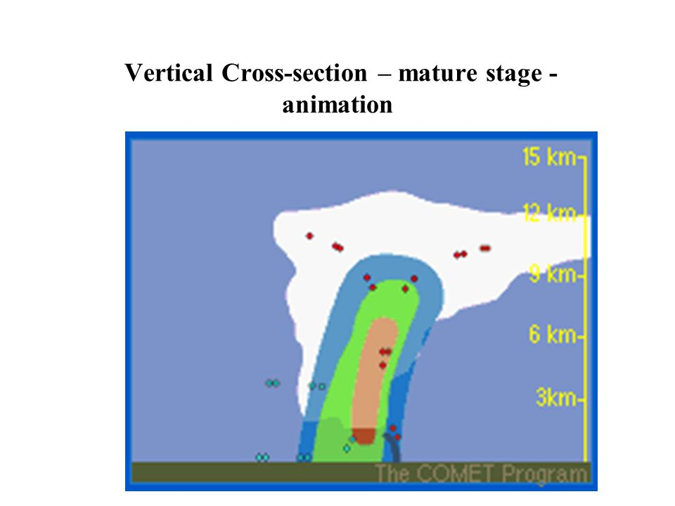Vertical Cross-section – mature stage - animation