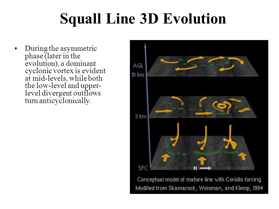 Squall Line 3D Evolution During the asymmetric phase (later in the evolution), a dominant cyclonic vortex is evident at mid-levels, while both the low-level and upper- level divergent outflows turn anticyclonically.