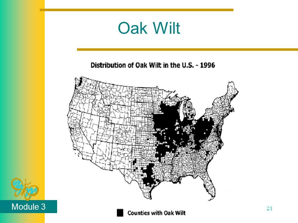 Module 3 21 Oak Wilt