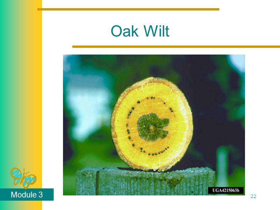 Module 3 22 Oak Wilt