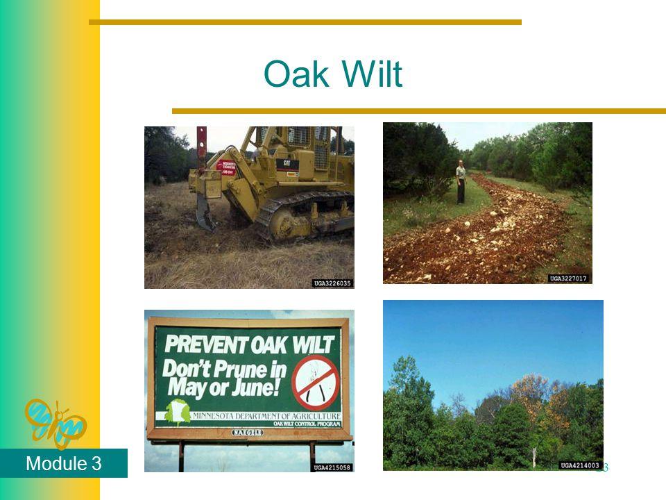 Module 3 23 Oak Wilt