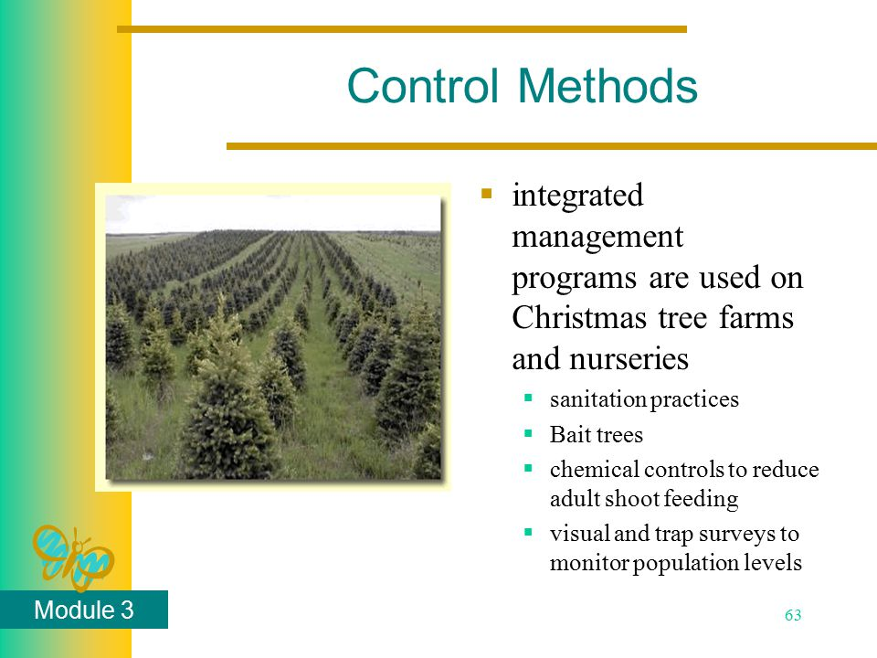Module 3 63 Control Methods  integrated management programs are used on Christmas tree farms and nurseries  sanitation practices  Bait trees  chemical controls to reduce adult shoot feeding  visual and trap surveys to monitor population levels