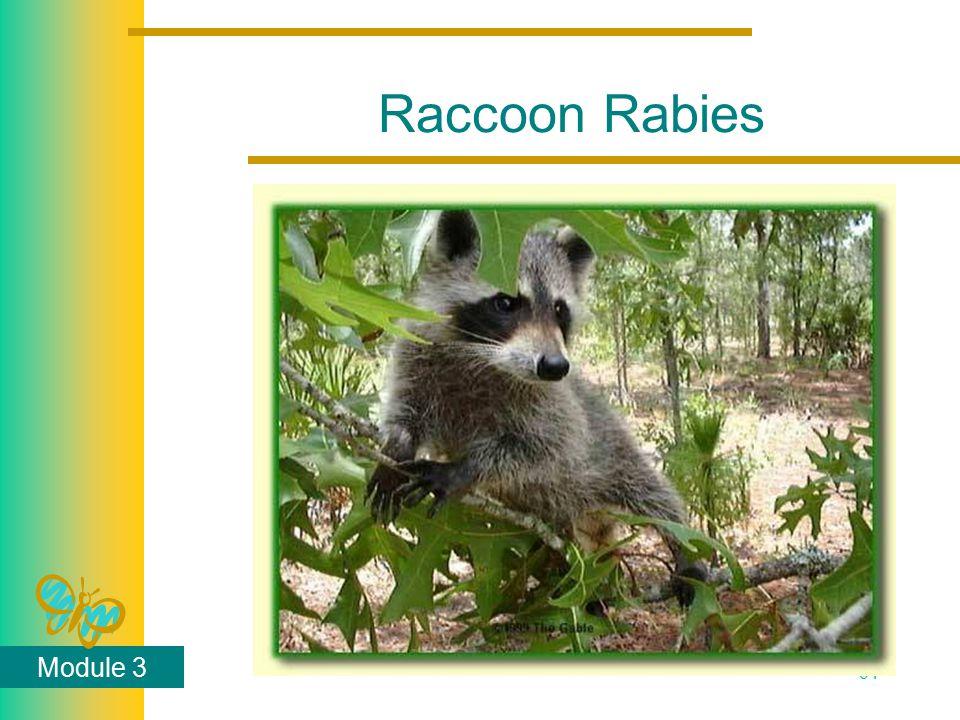 Module 3 64 Raccoon Rabies